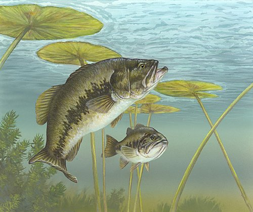 Animals wallpapers bass fish for Cool fishing wallpapers