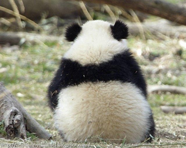 Funny fluffy panda.