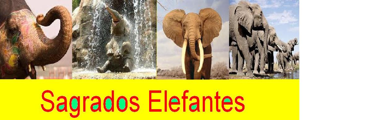 sagrados elefantes