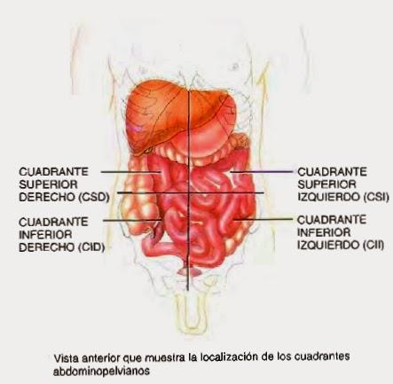 Regiones+del+abdomen+2.jpg