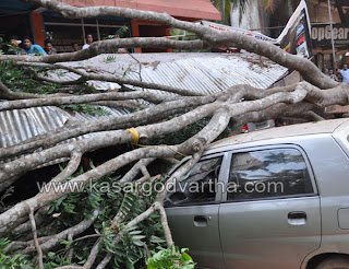 Tree fell down in Adkathbail, Kasaragod
