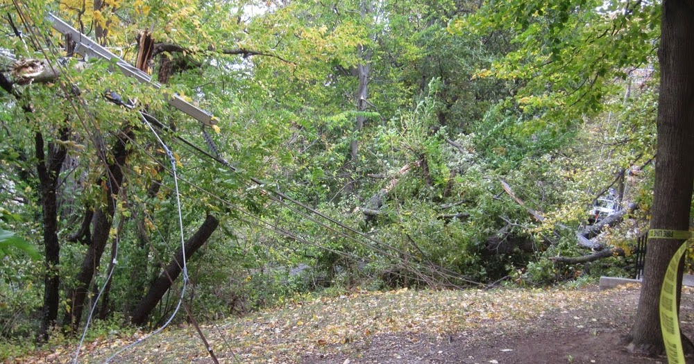Ode street tribune rosslyn tree cuts power and stops for 11 westmoreland terrace