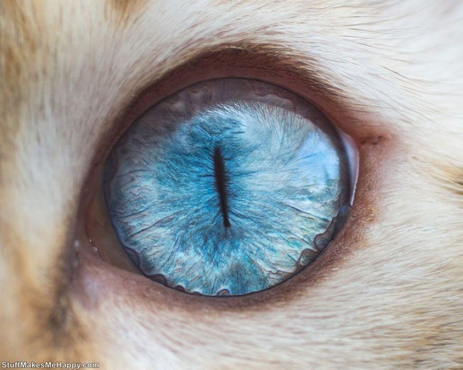 Wonderfully Hypnotic Macro Photographs of Cats' Eyes by Photographer Andrew Marttila