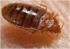 If You Live In These 10 Cities, You Might Have Bed Bugs -- Yuck!