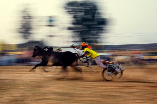 Bullock Cart Race, Rural Olympic, Punjab