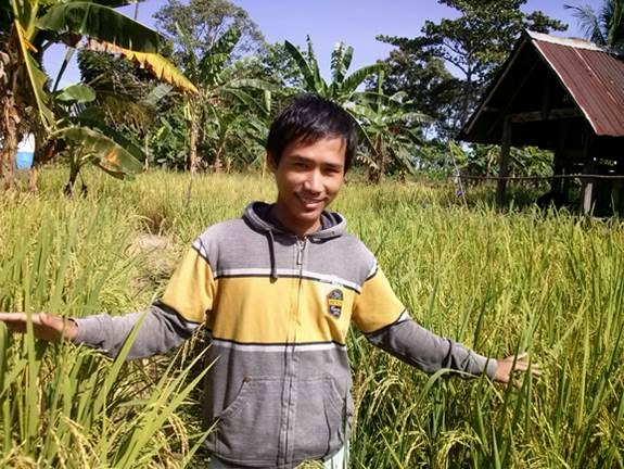 tips pergi ke sawah menikmati hamparan padi menguning