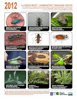 Illinois' Most Unwanted Invasive Pests