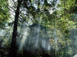 Amazônia e biodiversidade
