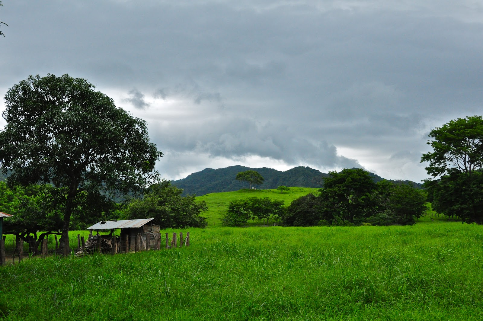 Tamarindo Costa Rica Daily Photo Countryside