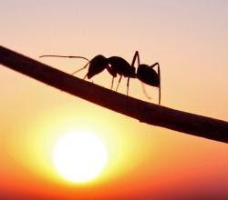 Formigas,mega interessante,curiosidade,ciência,natureza