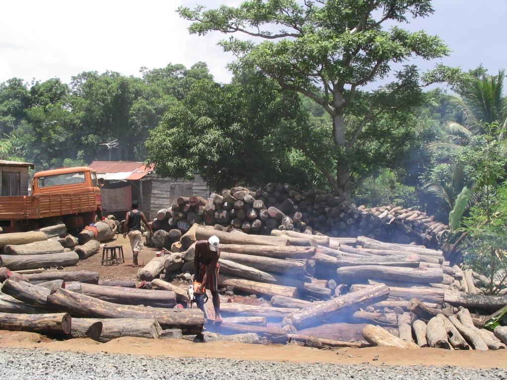 Human activities do the logging