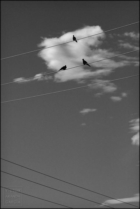 fotografia, tortolas, pajaros, cables, bonrepos i mirambell, nube, blanco y negro