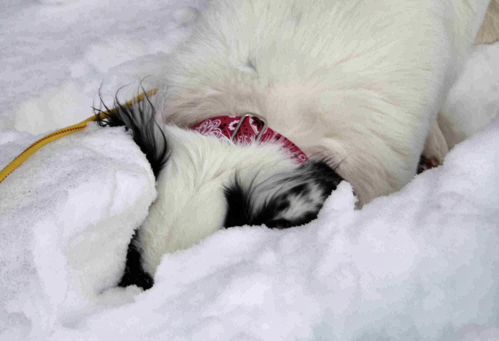 rescue dog; hopeful hearts