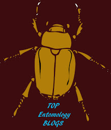 Entomology Blog List