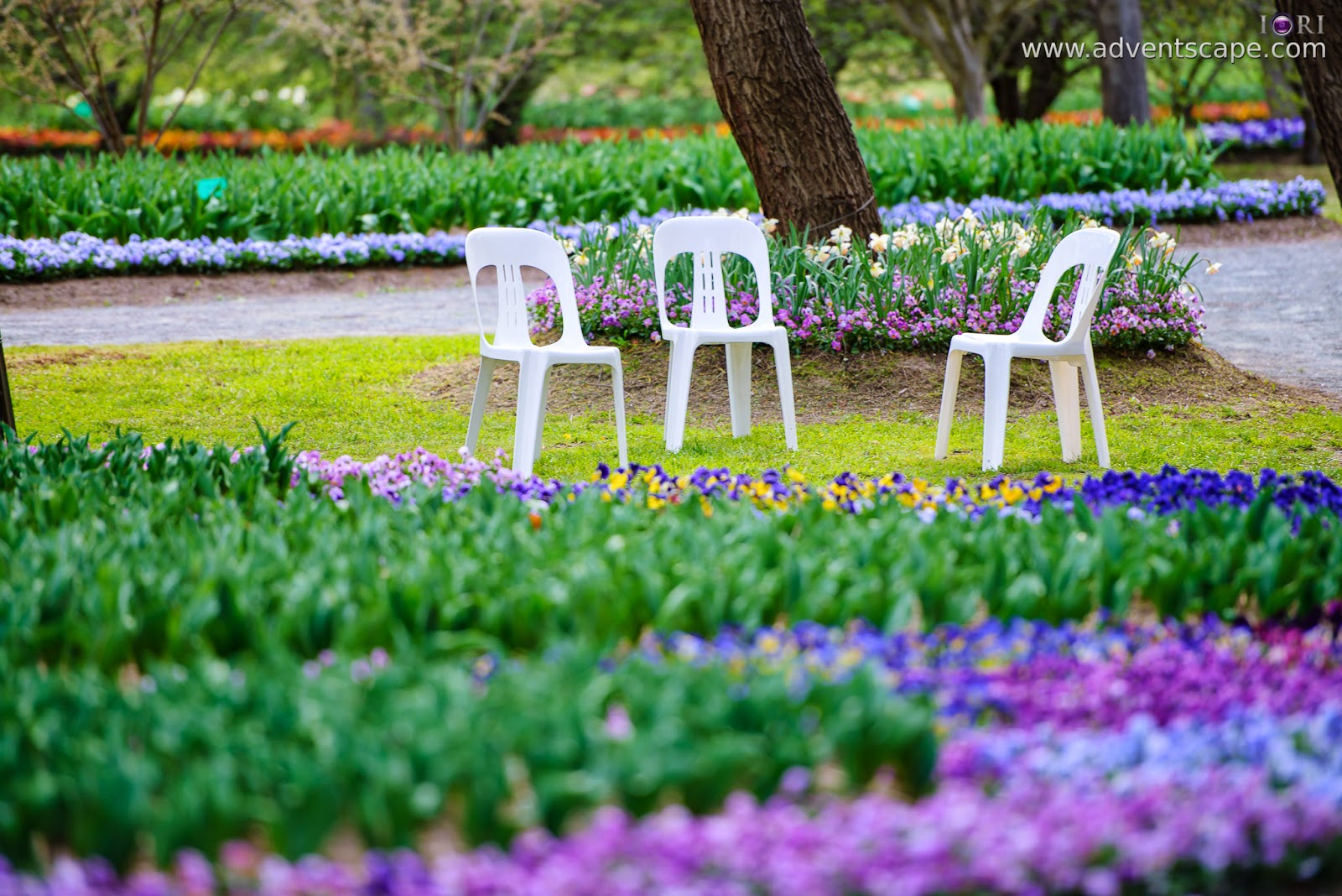Philip Avellana, adventscape, iori, Tulip Top Gardens, garden, spring, NSW, New South Wales, Sutton, Old Federal Highway, Bywong, 2621, chairs, monobloc