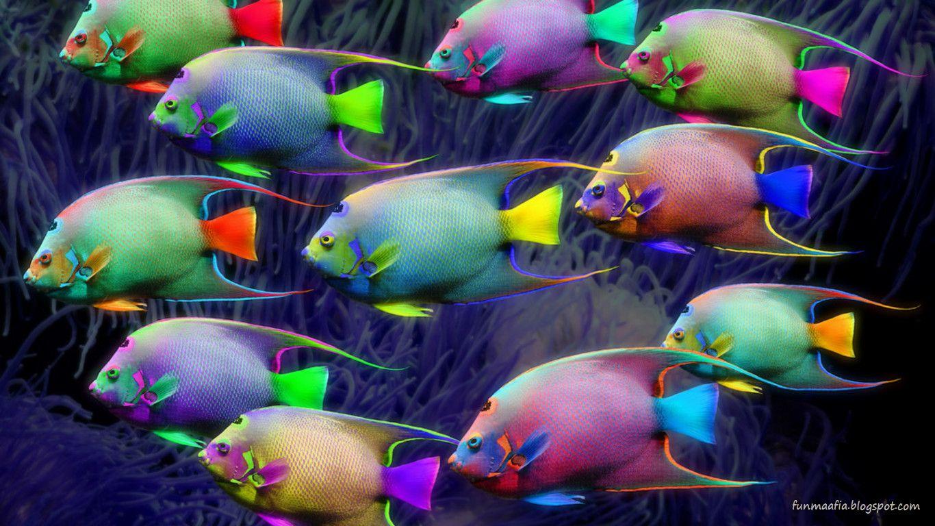 http://1.bp.blogspot.com/-iOrDEAcOark/TolIrWW92dI/AAAAAAAACC8/2YunpPYHcOw/s1600/neon-fishes-wildlife-wallpaper.jpg