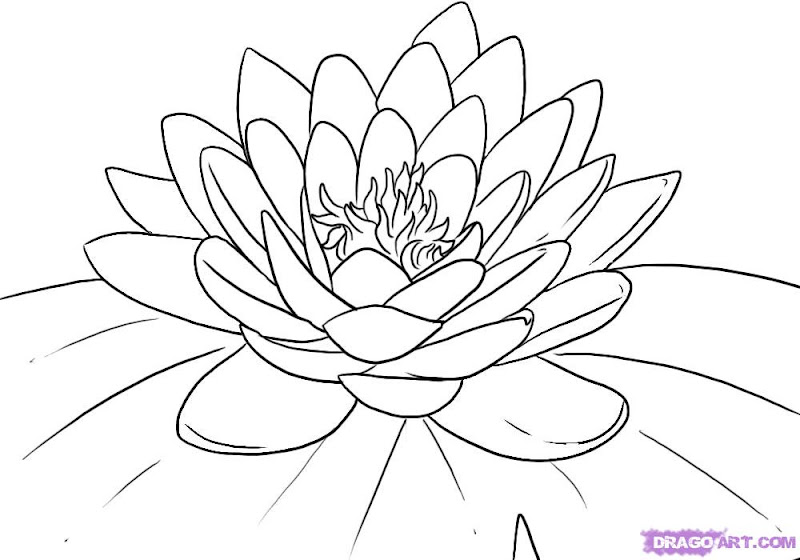 Lotus Flower Coloring Pages for Kids title=