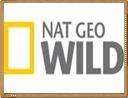 nat geo will online en directo