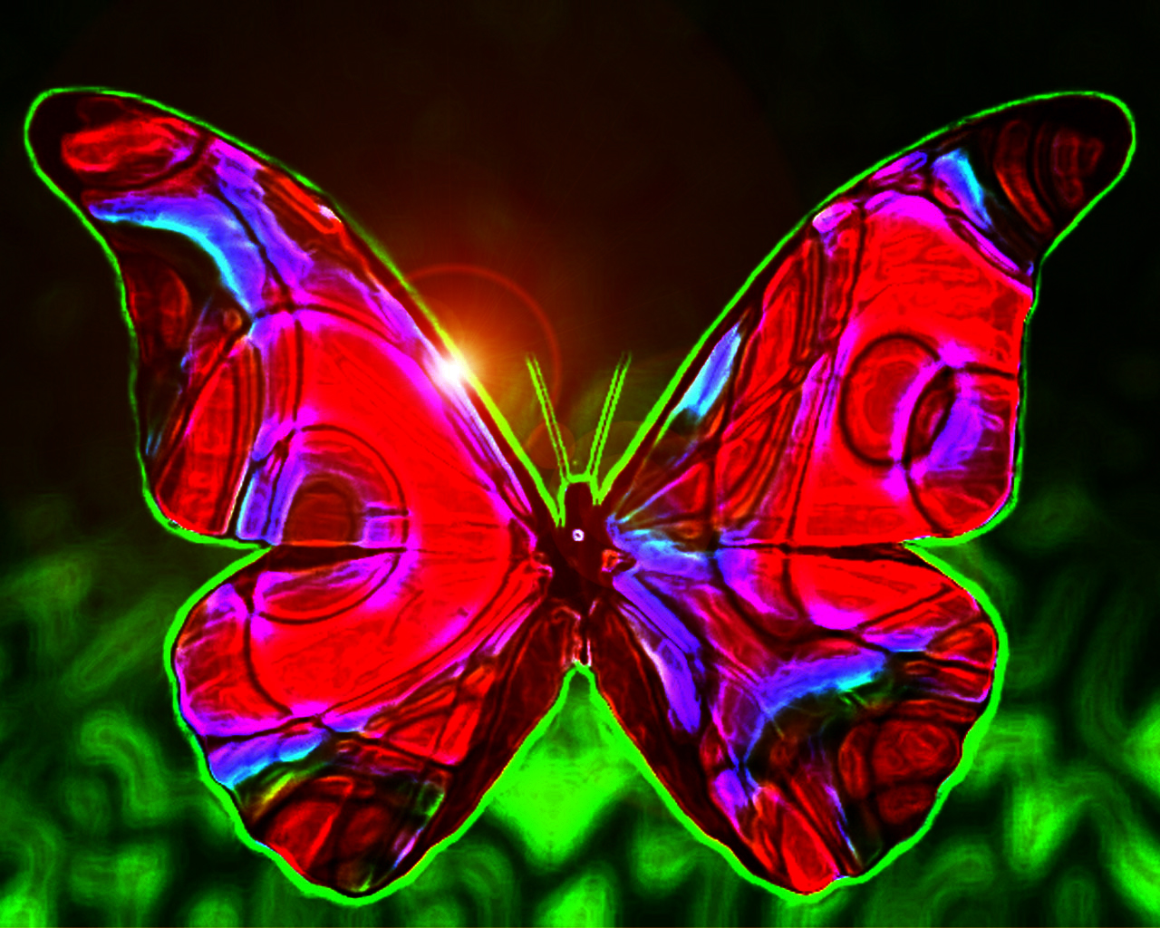 Most Beautiful Butterflies Wallpaper  My image