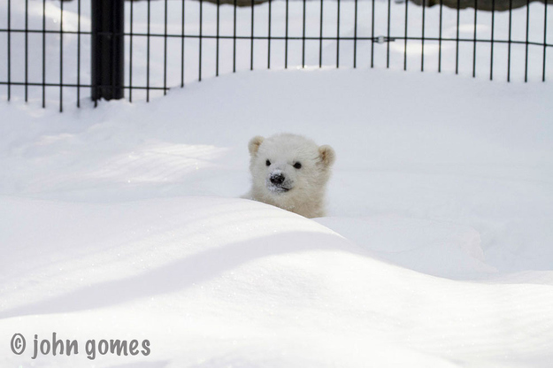 Kali, Baby Polar Bear