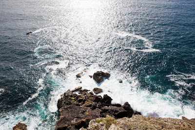 Two hour Sea Safaris with Wavehunters Marine