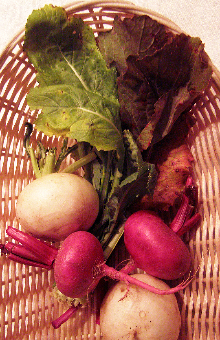 Red and White Japanese Turnips