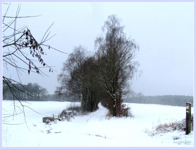 kronkelend pad in de sneeuw