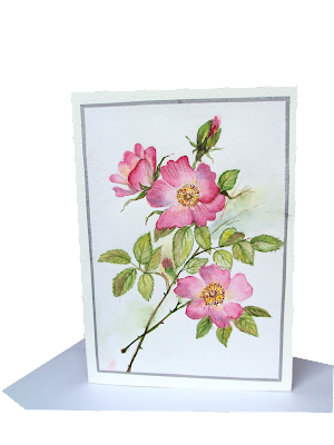 pink,bunch,wild,roses,painted,greetingcard,watercolour,botanical,floral,flowers