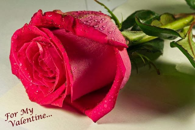 very beautiful love rose wallpaper