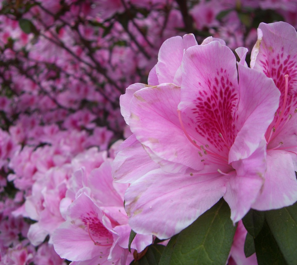 Flowers for flower lovers beautiful flowers hd wallpapers friday 25 january 2013 izmirmasajfo Images