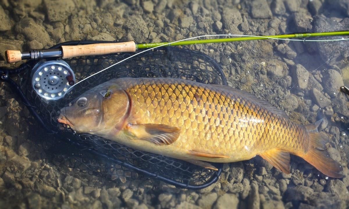 "the fiberglass manifesto: swift fly fishing ""carpcon"" discount, Fly Fishing Bait"