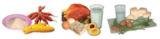 Alat Pencernaan Makanan Manusia dan Hubungan Makanan dengan Kesehatan