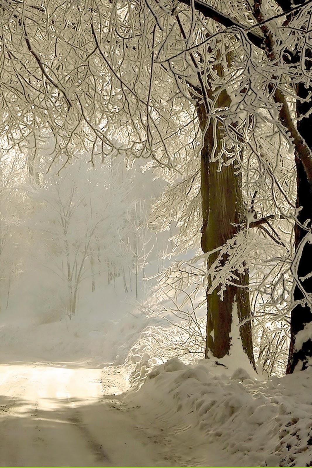 http://1.bp.blogspot.com/-iR71ElyO584/TututAaOAtI/AAAAAAAAB08/1HWG99pmo0Q/s1600/winter+road+trees_iphone+_new+years+eve_wallpaper.jpg