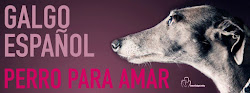 "Galgo de ""casa"", no de caza."