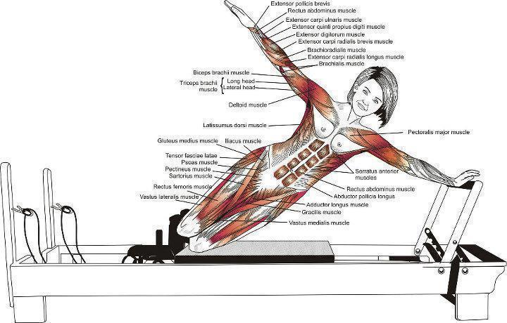 key muscles of yoga pdf