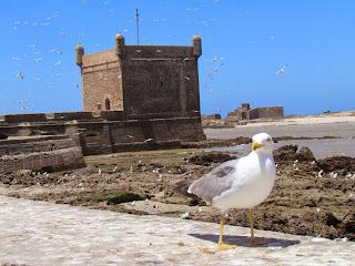 Essouira is een karakteristiek havenstadje, gelegen een Berberregio.