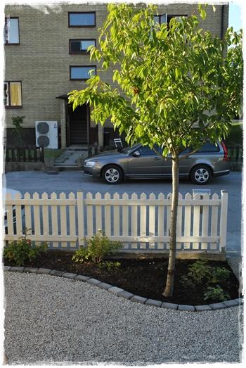 Staket staket rosor : Rosor och ruiner: Grusad framsida