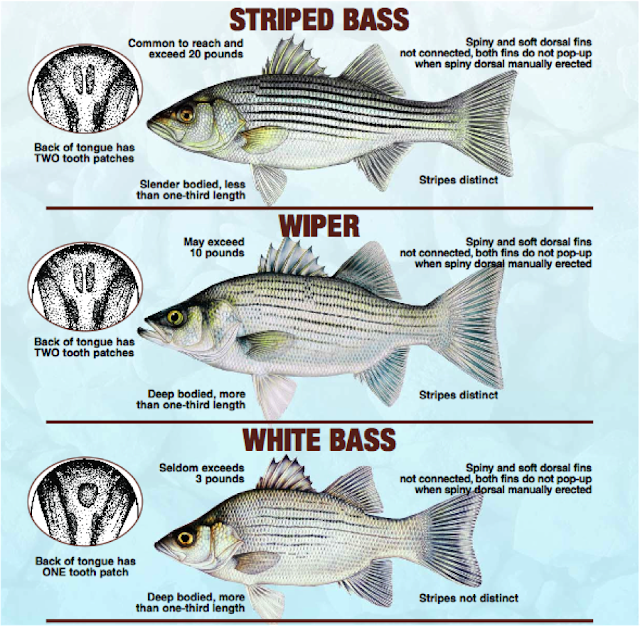 The rogue outdoors wiper id for Kansas fish and game