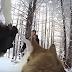 Imagini incredibile! Si-au filmat nunta folosindu-se de propriul caine si de o camera GoPro