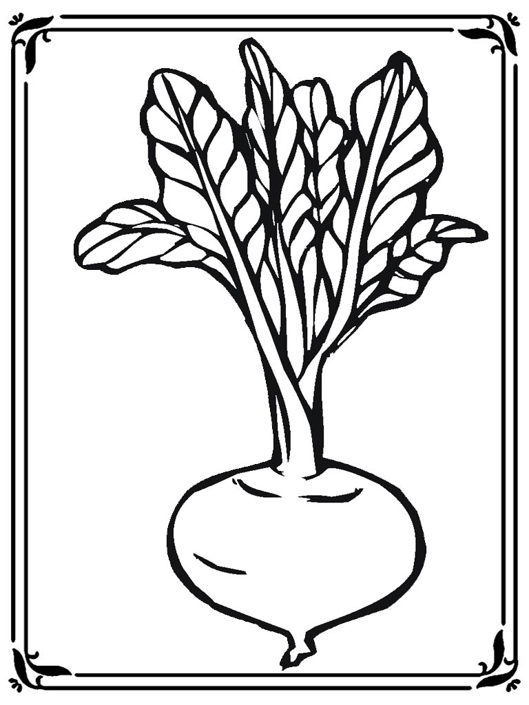 Coloring pages of turnip realistic coloring pages for Turnip coloring page