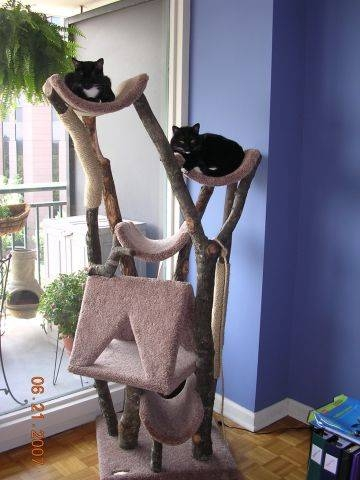 fine frugality different cat tree pics