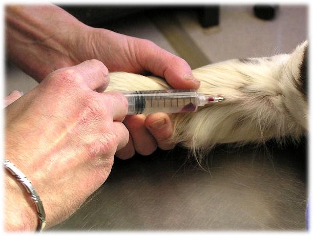 euthanasia in canada. AdoptMe Canada#39;s Cat amp; Kitten
