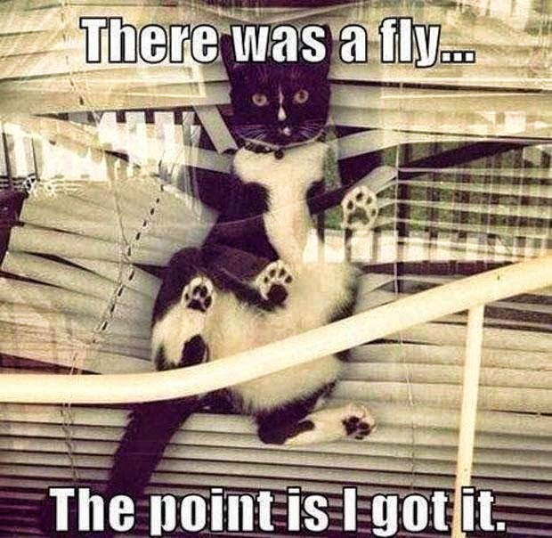 meme afraid cat