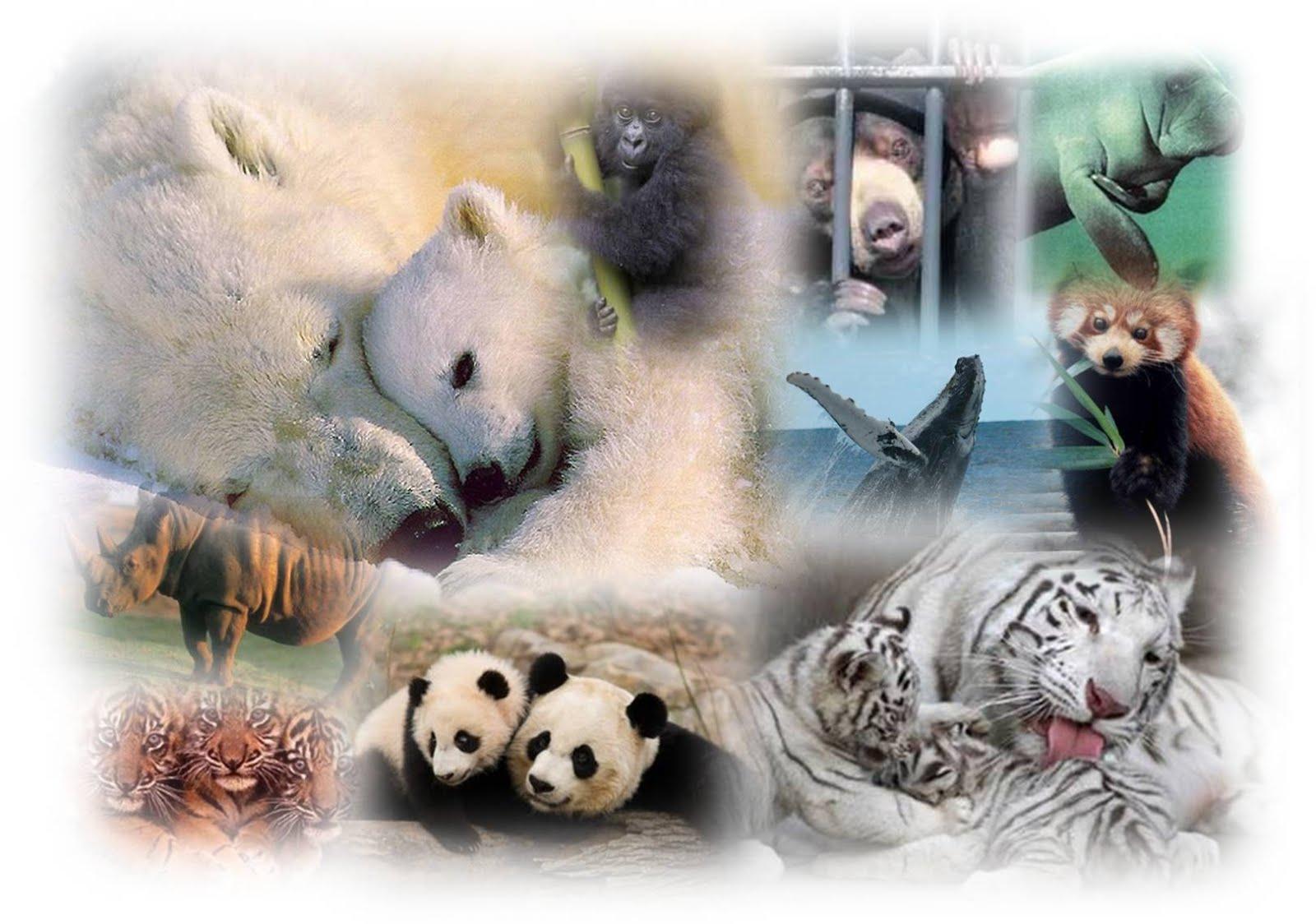 Repasando el tema de los animales
