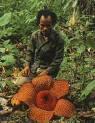 Raflesia Arnoldy (Bunga Bangkai)