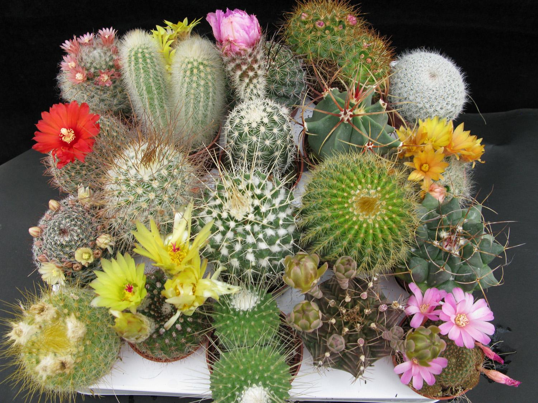Piante e fiori piante grasse for Cactus de exterior