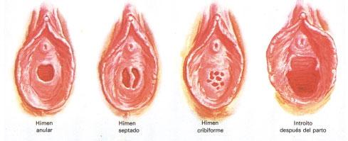 La enciclopedia sexual el himen