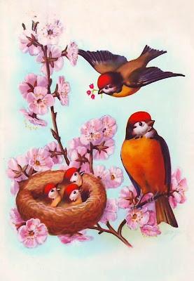 pájaros ilustración vintage
