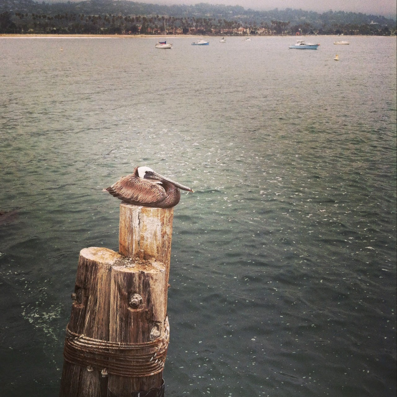 Favorite Places: Santa Barbara Pier