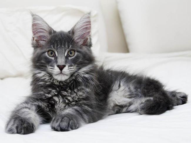 Tout sur le chat :) ♥ - Page 1 - Tout sur le chat :) ♥